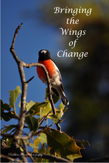 Bringing the wings of change
