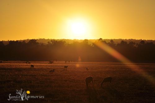 20th of January 2013, Sunrise