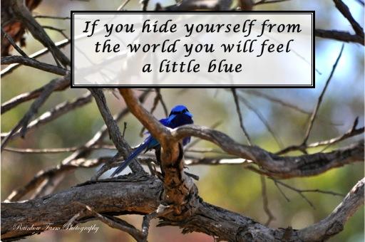 FBQS 281211 blue